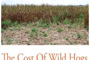 The Cost Of Wild Hogs