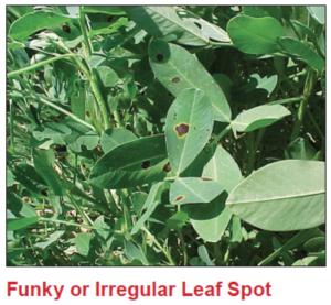 funky-irregular-leaf-spot