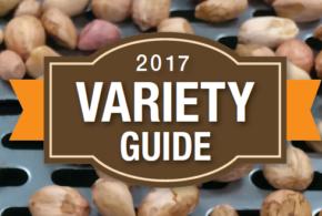 Peanut Variety Guide 2017
