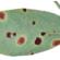 Leaf Spot In A Dry Year