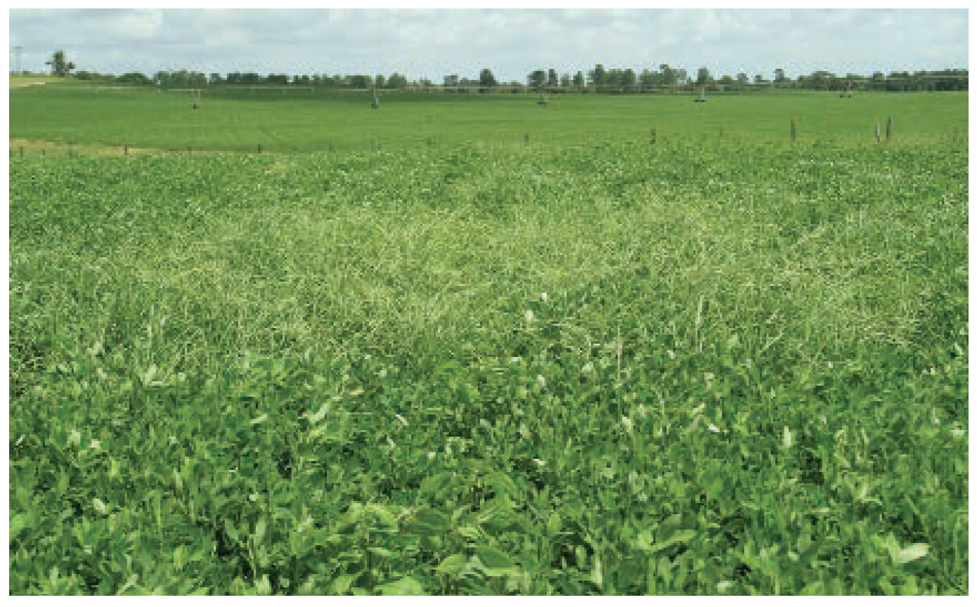 Two Herbicide Options For Dryland Production | Peanut Grower