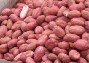 treated peanut seed