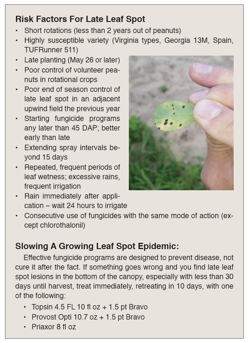 risk factors for late leaf spot