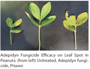 new leaf spot fungicide
