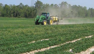 spraying peanuts