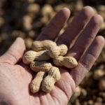 arkansas peanuts