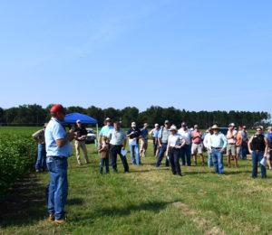 georgia cotton and peanut field day