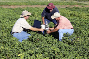 water research in peanuts