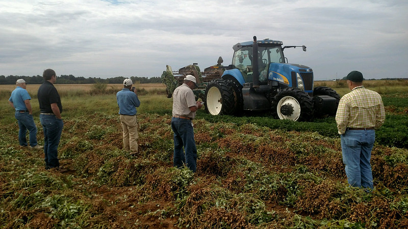 randolph county, ark., peanut harvest