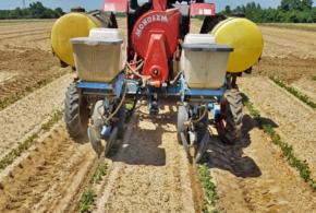 Surveys Indicate Similar Or Slight Reduction In Peanut Acres