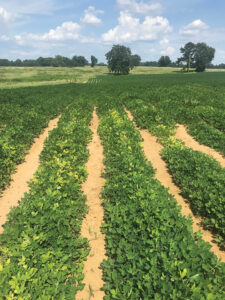 henry county, alabama zinc deficiency