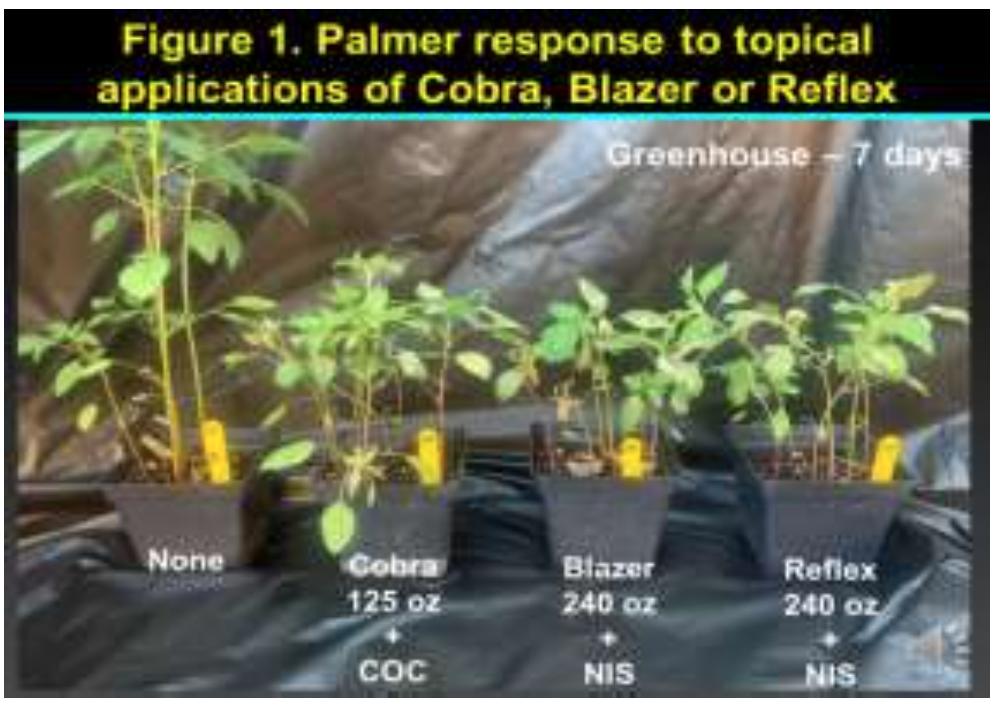 ppo resistant pigweed trials