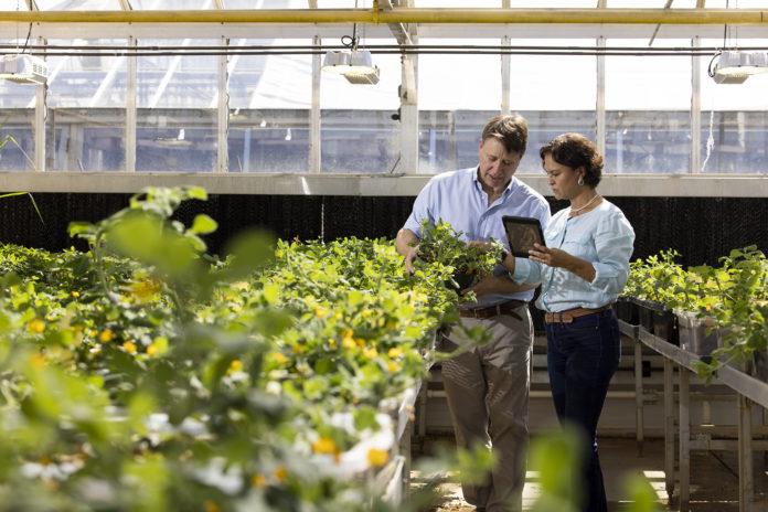 bertolis in greenhouse