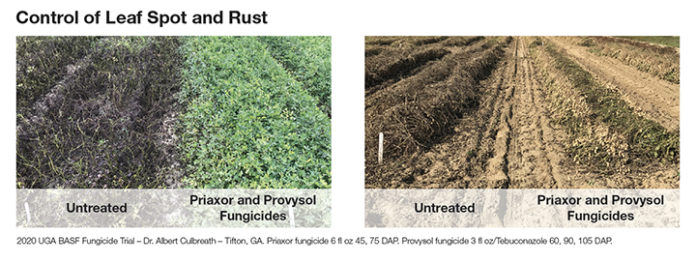Leaf spot and rust trial from BASF